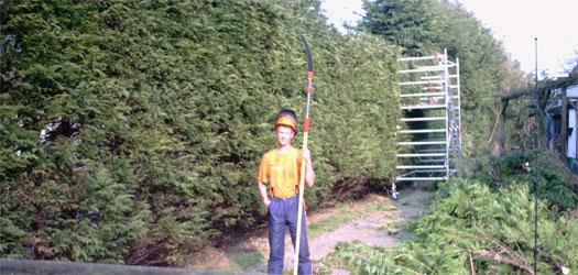 Coniferen korter maken